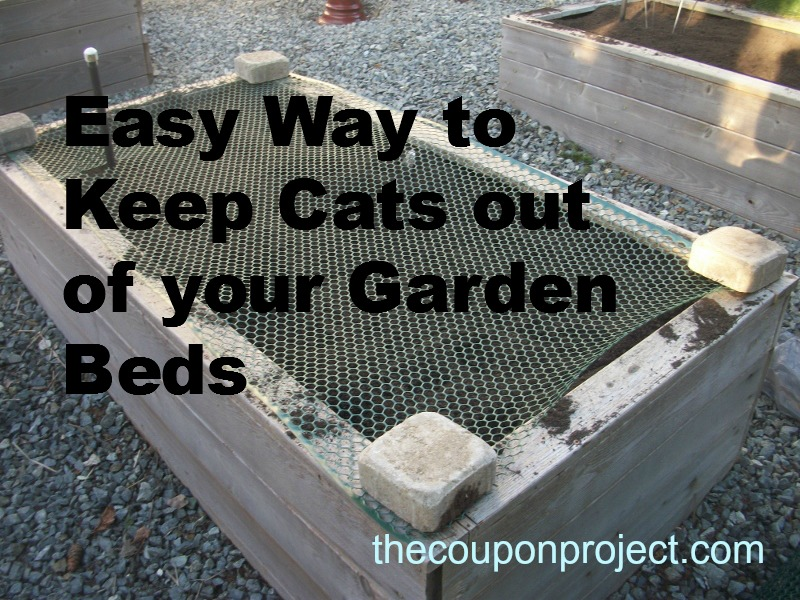 Cheap and easy solution to keep cats out of your garden