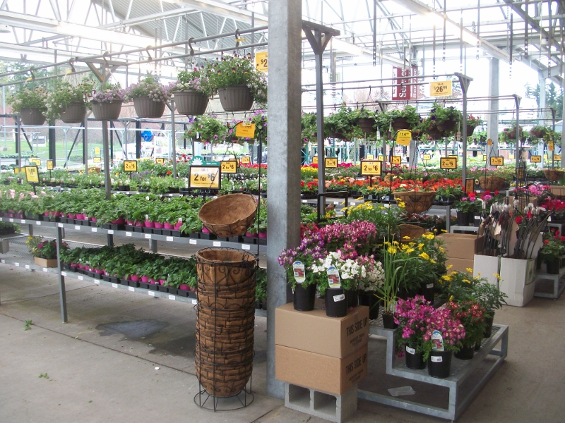 Beautify your Garden for Less at Fred Meyer 25 Gift Card Giveaway