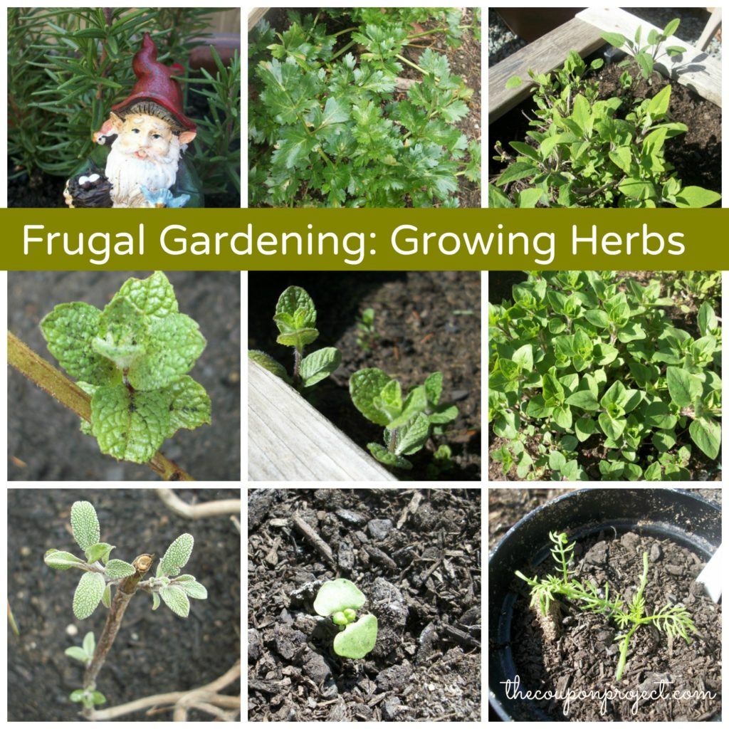 Growing Herbs | The Coupon Project