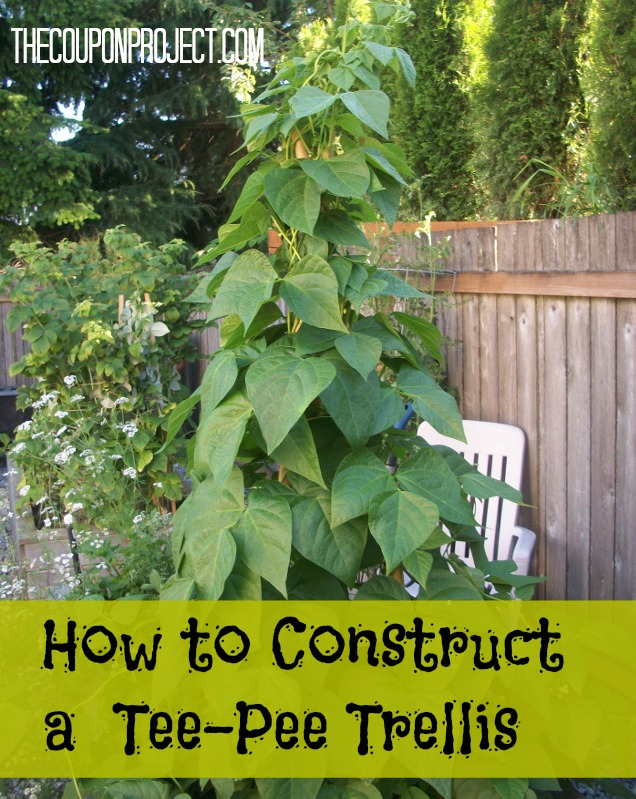 Frugal Gardening How to Construct a Tee Pee Trellis for about $5