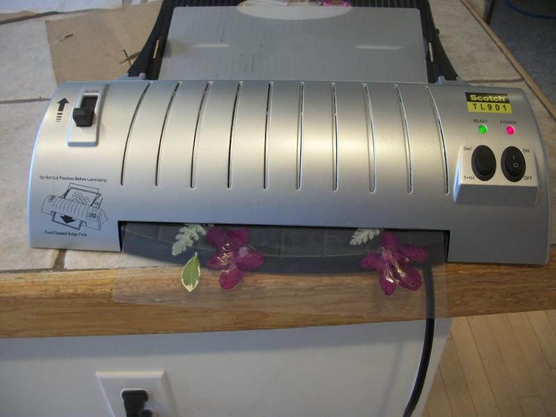 microwave pressed flower tutorial with laminator