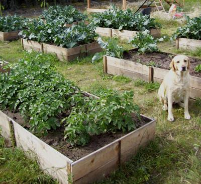 raised garden bed ideas - build your own