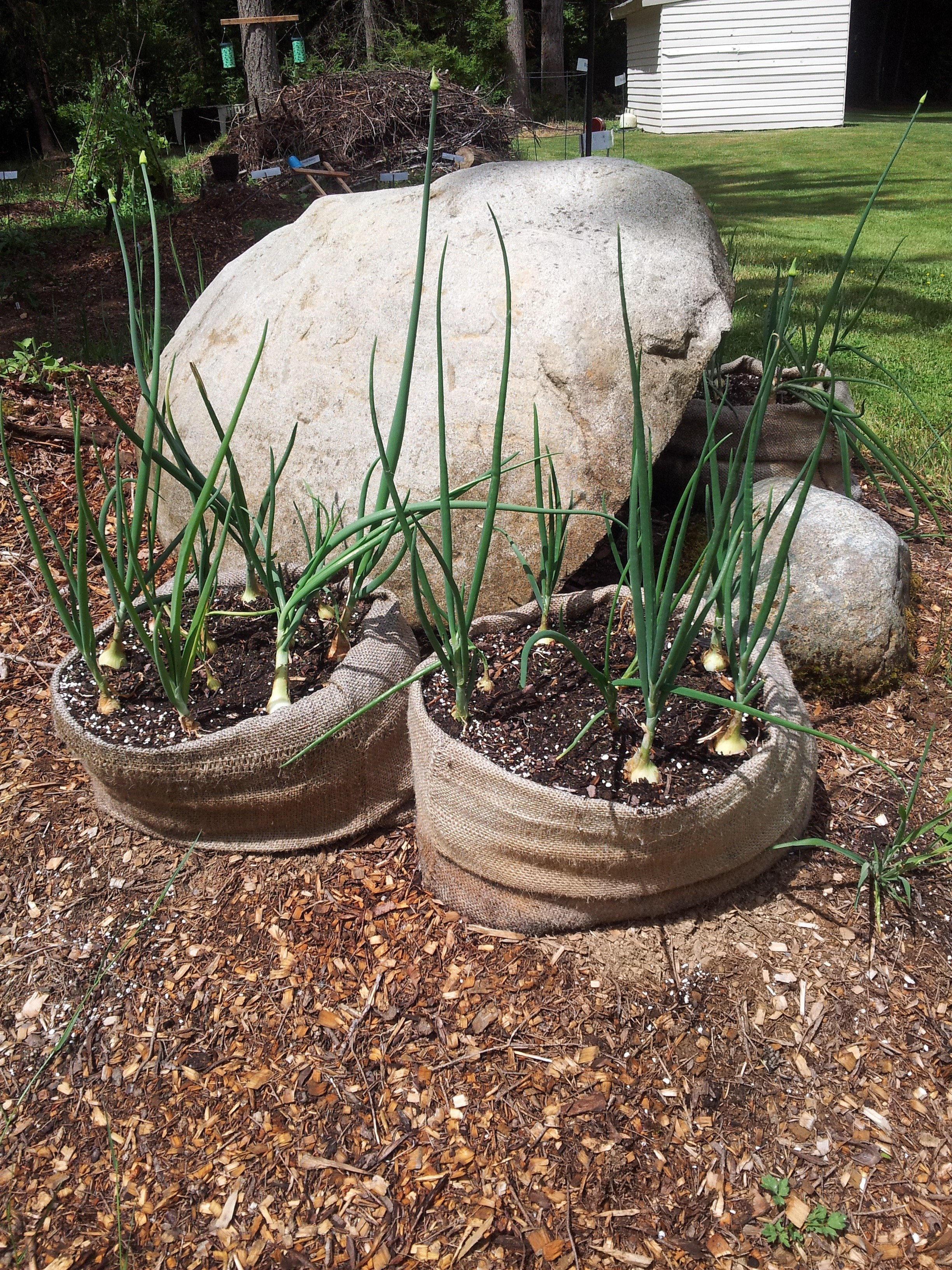 Frugal gardening four inexpensive raised bed ideas for Rock garden bed ideas