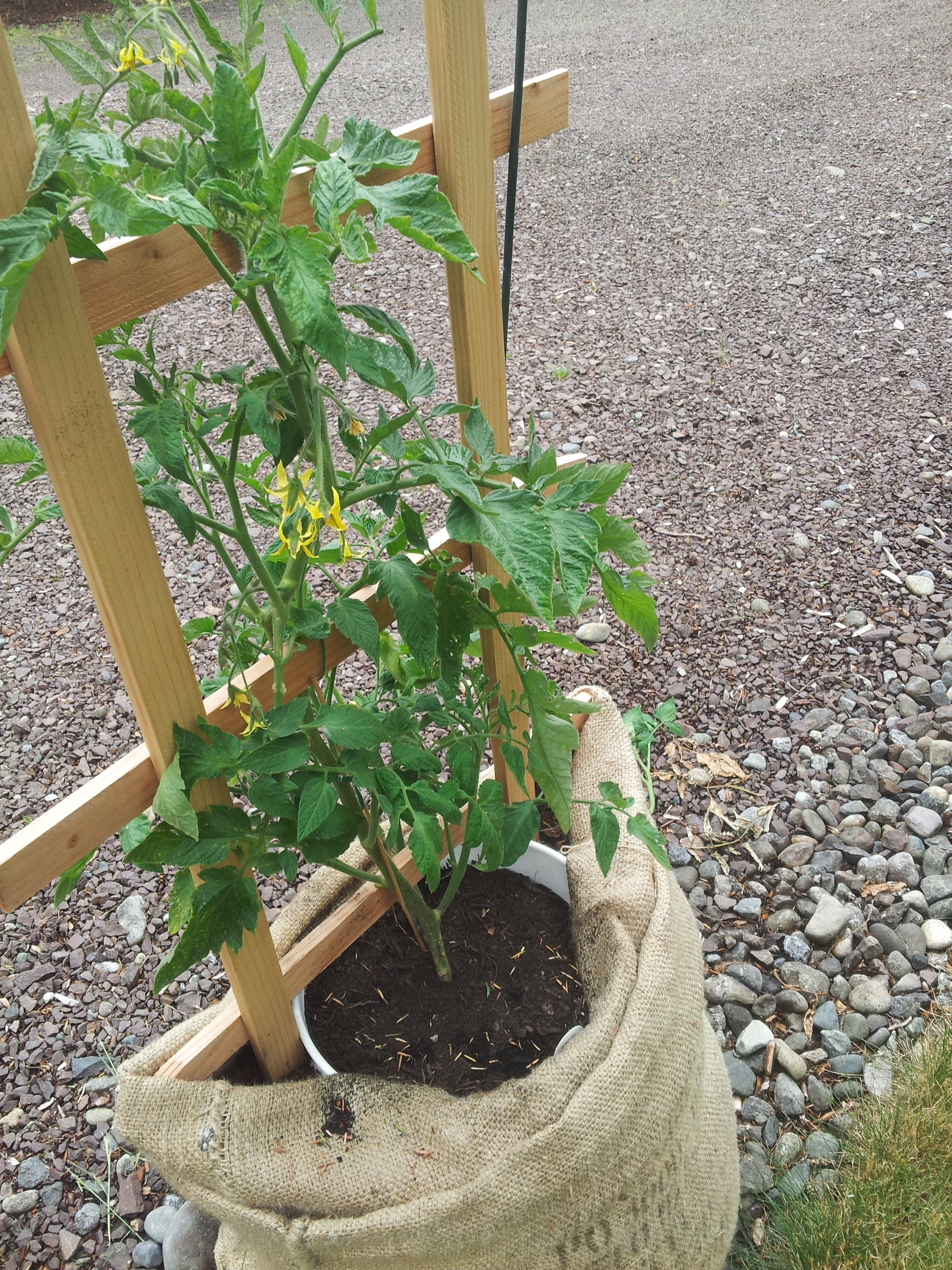 Growing Food In Burlap Sacks