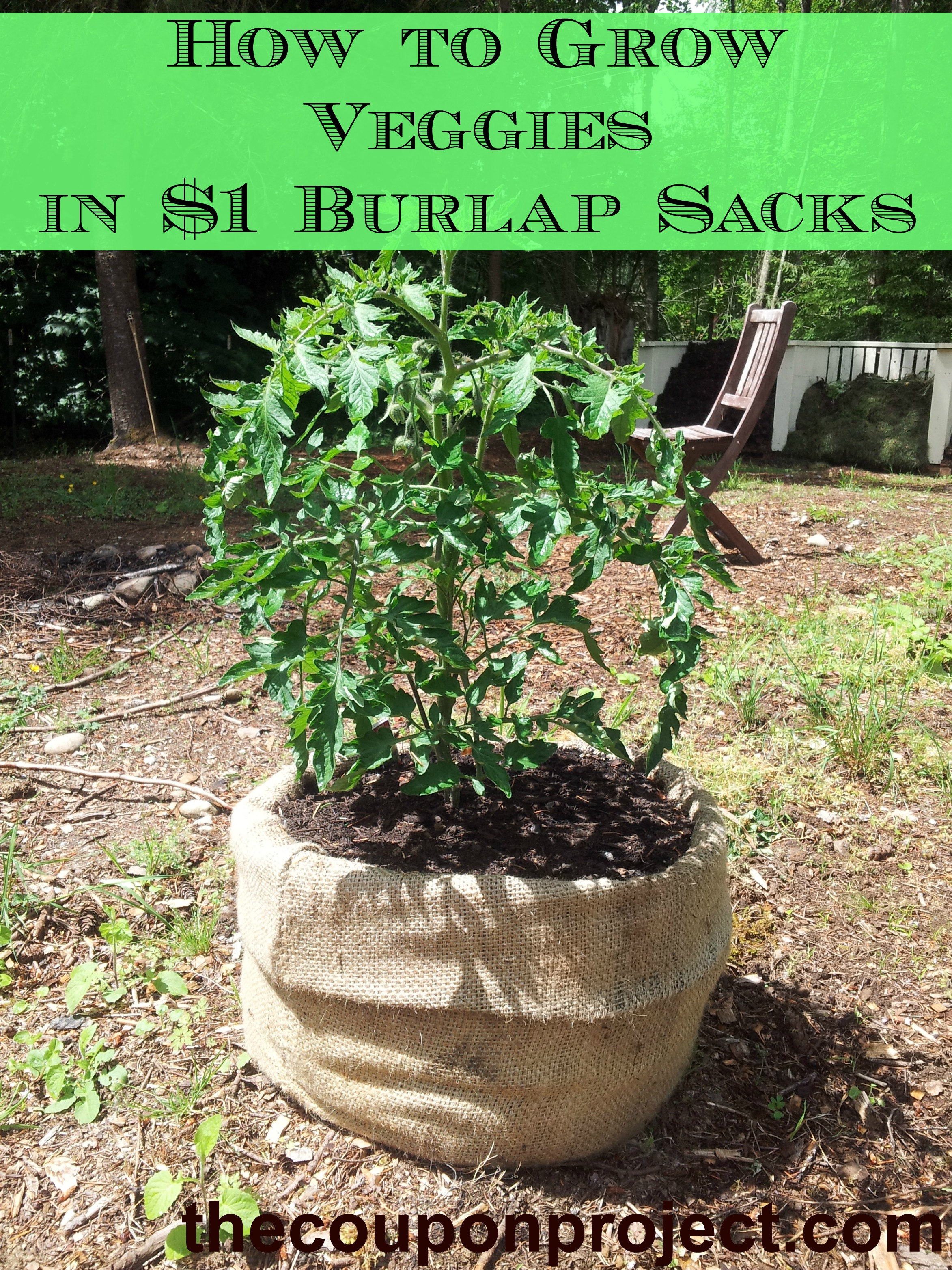 Frugal Gardening Growing Food In Burlap Sacks The Coupon Project