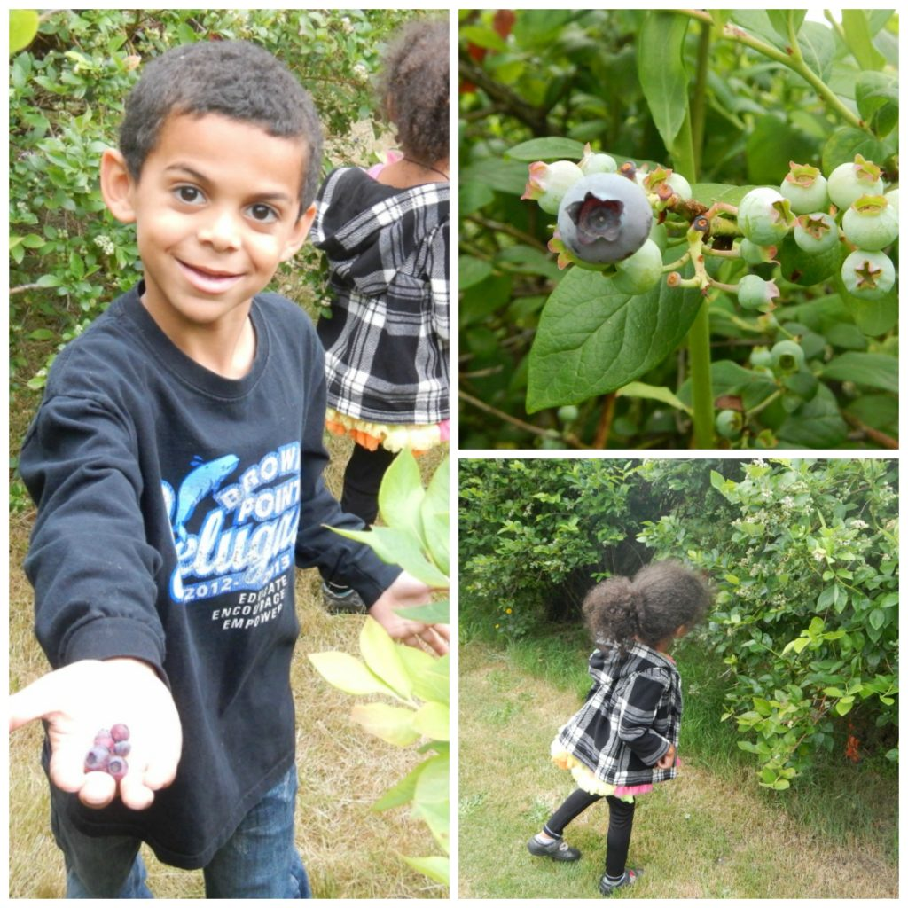 Charlotte's Blueberry Park, Tacoma | The Coupon Project