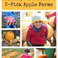 Puget Sound Pumpkin Patches, Corn Mazes and U-Pick Apple Farms