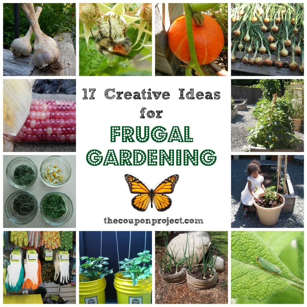 10 Creative Vegetable Garden Ideas: 8 Container Gardening Tips For Beginners