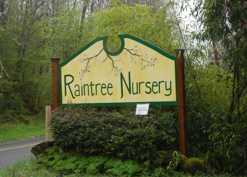 Raintree Nursery in Morton, Washington