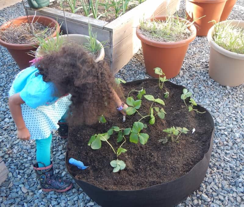 raised garden bed ideas - grow bag