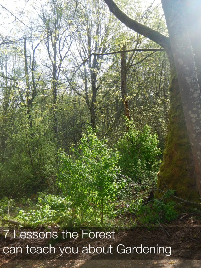 7 Lessons the Forest Can Teach about you about Gardening