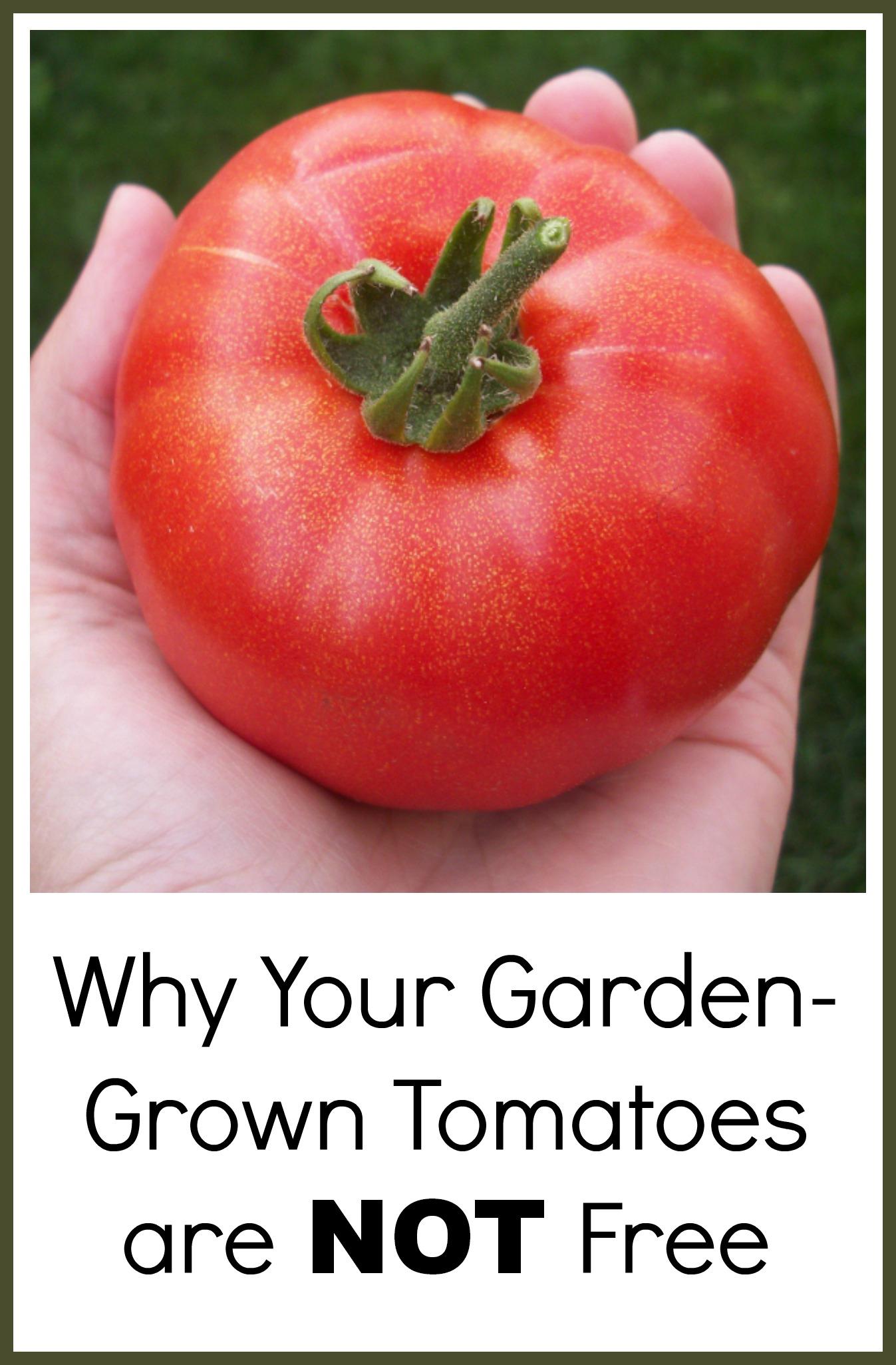 tomatobanner