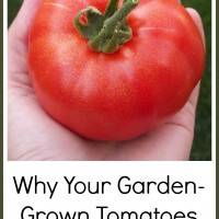 Why Your Garden-Grown Tomatoes Are Not Free