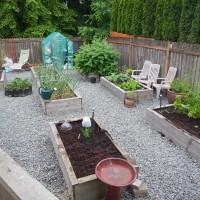 June Gardening Update: Bugs, Birds, and Bunnies!