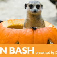 Pumpkin Bash at Woodland Park Zoo: Kids in Costume Get in FREE!