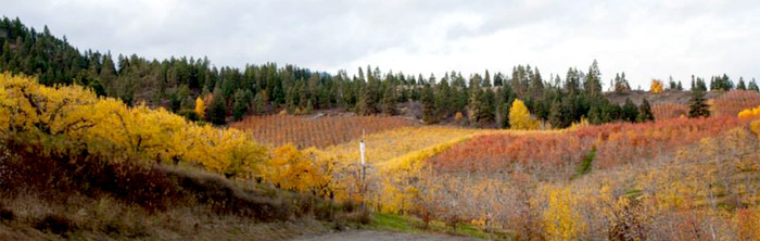 Fall Winery Tour + Lunch + Transportation