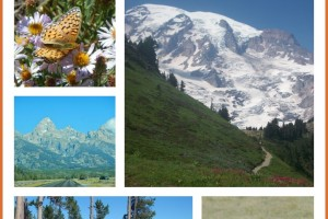 Free National Parks Entrance Days – for 2017