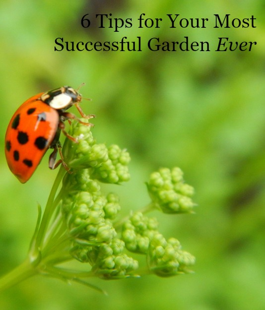 6 tips for your most successful garden EVER