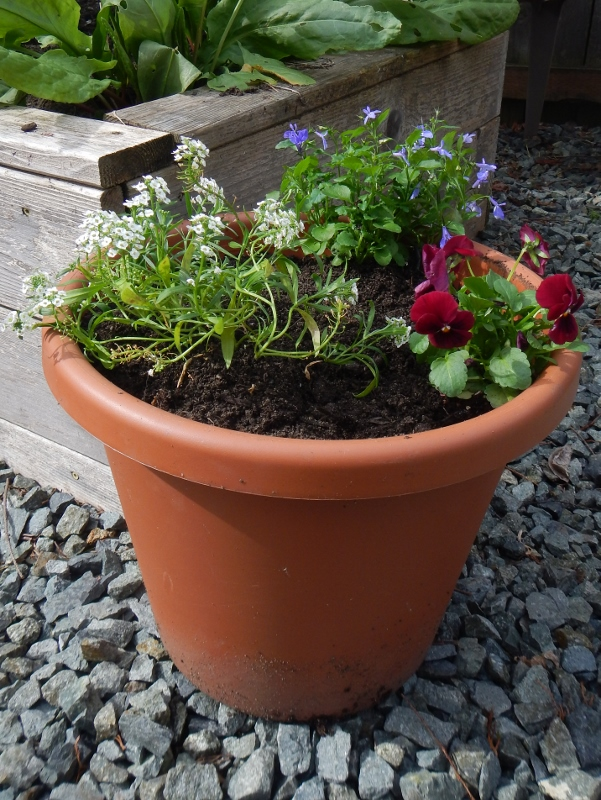 Simply grown container gardens.