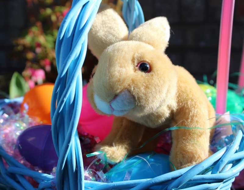 Easter Bunny in a Cute Basket