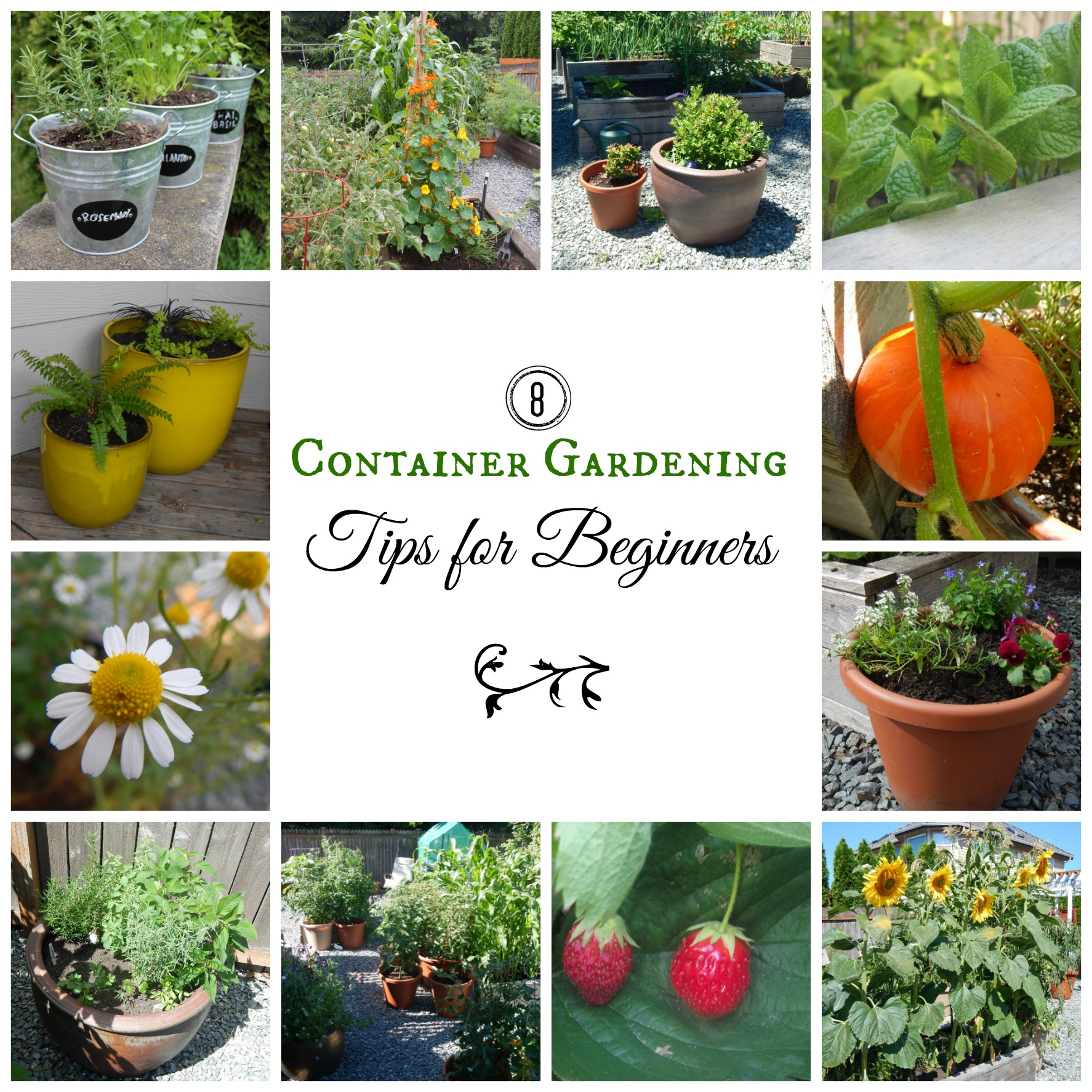 8 container gardening tips for beginners for Gardening tips