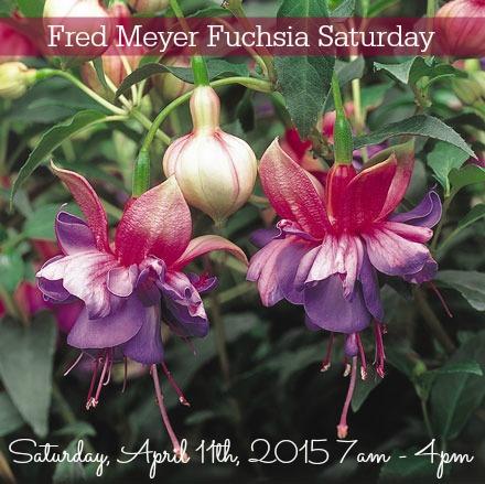 Fred Meyer Fuchsia Saturday - April 11, 2015