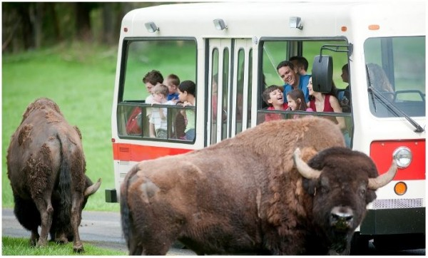 Northwest Trek Wildlife Park Groupon