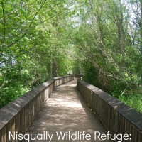 Nisqually Wildlife Refuge: Favorite New Family Spot (it's free!)