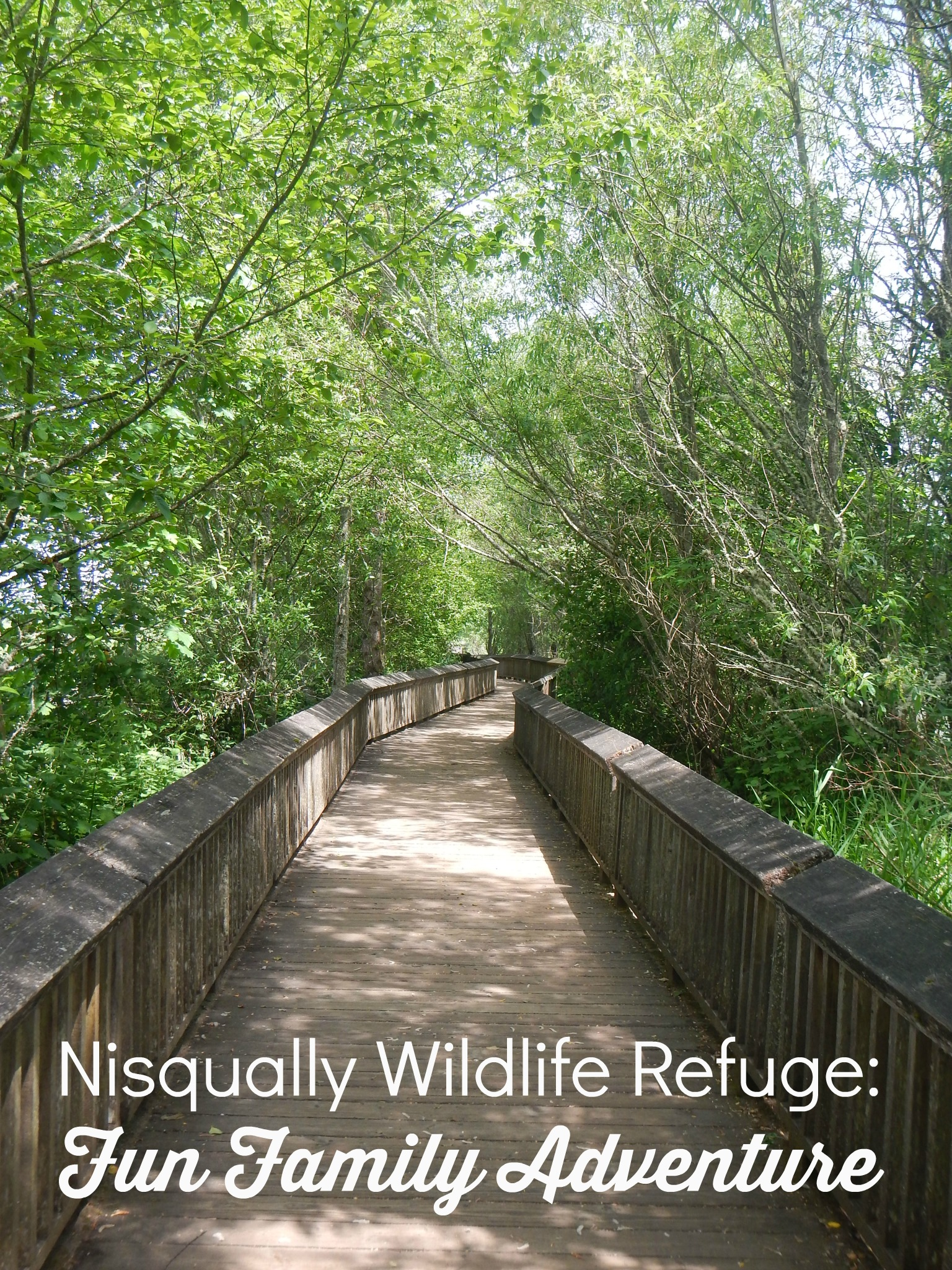 Nisqually Wildlife Refuge (WA): fun place to visit with the family!
