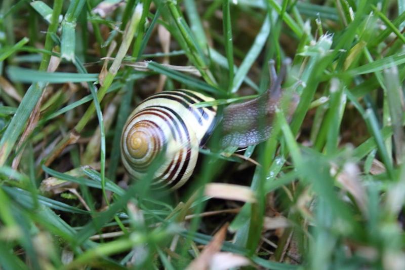 Snail (800x533)