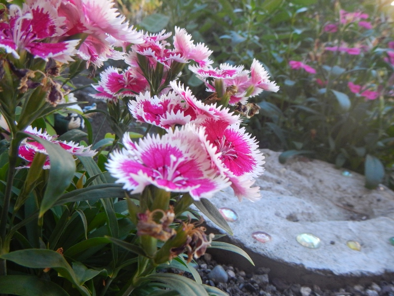 Flowers in a front porch area