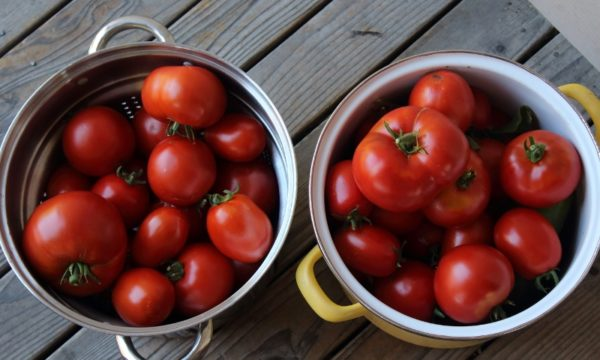 15 Pounds of Garden Tomatoes