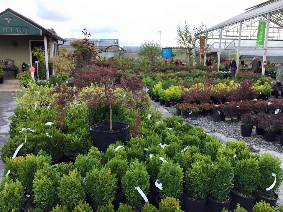 40 Off Nursery Perennial