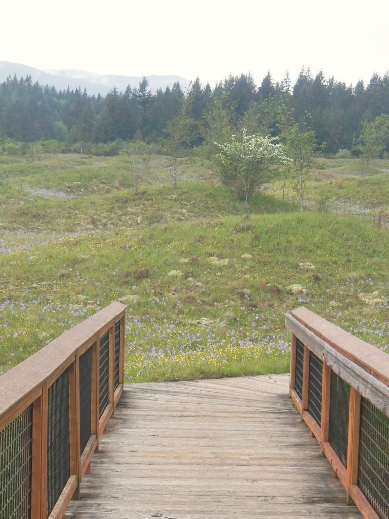 Mima Mounds Lookout