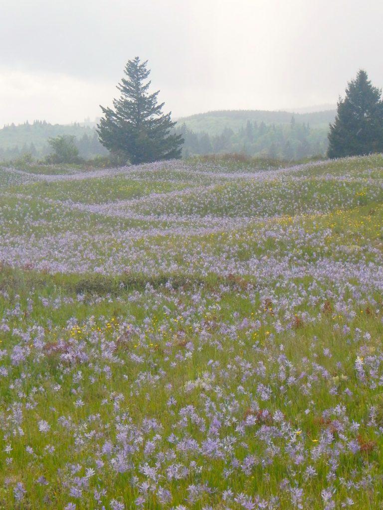 Camas Meadows at Mima Mounds