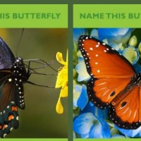 name a butterfly for mom