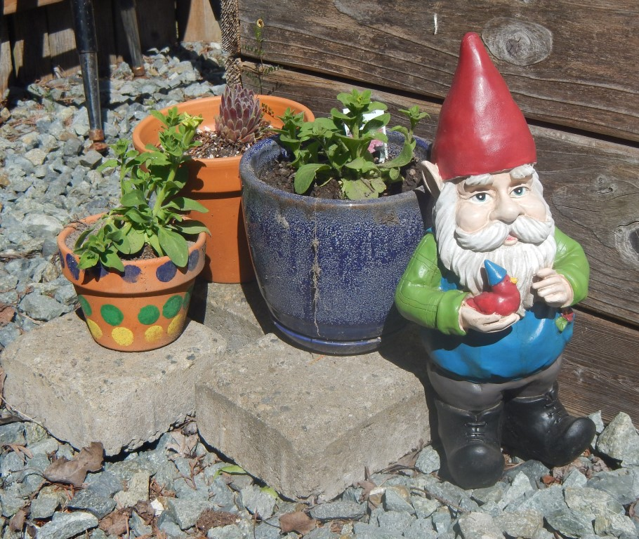 Gnome in the Garden