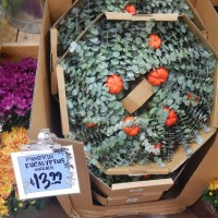 My Trip to Trader Joe's: The PUMPKINS are coming!