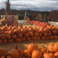 Sterino Farms (Puyallup): All Carving Pumpkins $1 Each!