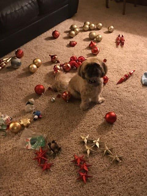 Smike and the Christmas Tree