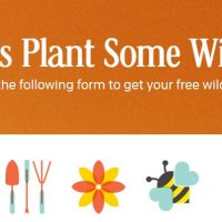 Free Pack of Wildflower Seeds (from Cheerios)